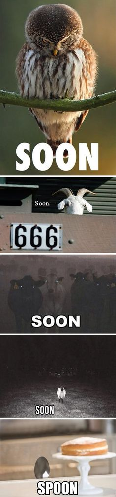 Soon. Soon. What? // funny pictures - funny photos - funny images - funny pics - funny quotes - #lol #humor #funnypictures