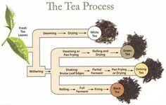 ITT I aware the Misc on Loose Leaf Tea - Bodybuilding.com Forums