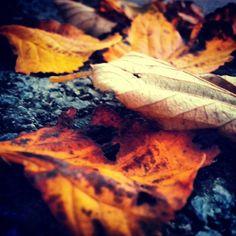 Autumn Moth, Autumn, Photos, Animals, Instagram, Fall, Pictures, Animaux, Photographs