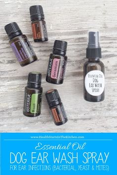 All-Natural, Homemade Essential Oil Dog Ear Wash Spray - For Ear Infections (Bacterial, Yeast & Mites) . Only use on dogs . Essential Oil is toxic to cats. Dog Ear Mites, Dogs Ears Infection, Essential Oils Dogs, Essential Oil Uses, Ear Ache Essential Oil, Dog Ear Wash, Ear Infection Home Remedies, Elixir Floral, Coconut Oil For Dogs