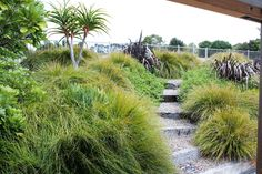 New Zealand Woman's Weekly Garden Landscape Design, Garden Landscaping, Landscaping Ideas, Dillon Beach, New Zealand Beach, Beach Gardens, Native Plants, Auckland, Garden Inspiration
