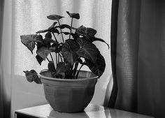 Bodegon-Planta en blanco y negro#fotos,#blancoynegro,@fotossinporque ,