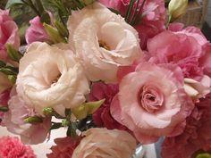Phlox Detalles en Flores y Decoracion PLAZA La Cascada AV.Plan de Ayala 1759 Local K-7 Cuernavaca Morelos Mexico CEL 045 55 3848 6320