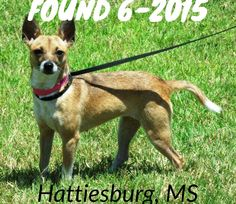 "#FOUNDdog 6-2015 STRAY #Hattiesburg #MS Female 1.5y ""Gracie"" https://www.facebook.com/MARLshelter/posts/10152895786786566:0"
