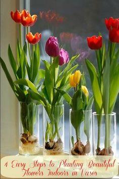 Lovely vase grown tulips