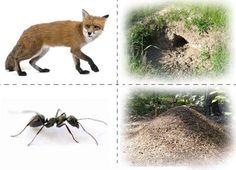 Habitation des animaux Renard, fourmi, taupe, écureuil...