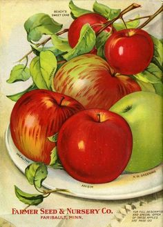 The back cover of the 1913 issue of Farmer Seed & Nursery's catalog showcased crisp, bright apples.  This beautiful image must have had growers thinking of ways to cook with and/or snack on these beauties.  Farmer Seed & Nursery originated in Faribault, MN in 1888. Andersen Horticultural Library hosts a  collection of vintage Farmer Seed & Nursery catalogs.