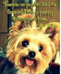 There is no psychiatrist in the world than a puppy licking your face! #yorkie #quotes #doglove  http://ift.tt/1MZLWNI