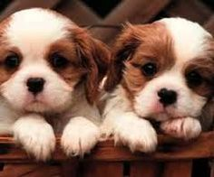 Image result for cutepets