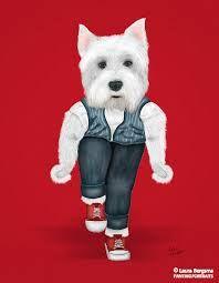 Mâine voi face parada modei!  #westie #puppy #dog #red #viataincluj