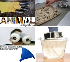 W5 - Animal Adaptations - lots of different experiments from different sites.