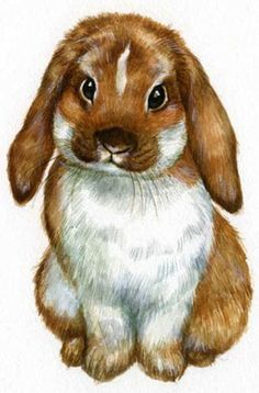 drawings of disney Animal Sketches, Animal Drawings, Art Drawings, Watercolor Animals, Watercolor Art, Baby Animals, Cute Animals, Bunny Painting, Rabbit Art