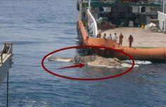 Para Nelayan Kaget, Apa Gerangan Makhluk Besar Yang Mereka Temukan...?