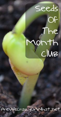 I explain how the Seeds of The Month Club works and why it's a great deal. #beselfreliant
