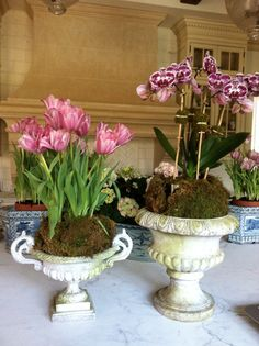 Tulips & orchid in garden urns