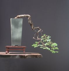 29 Best Bonsai Display Stands Images In 2013 Consignment