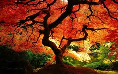 Autumn Tree, iPhone Wallpaper, Facebook Cover, Twitter Cover, HD ...