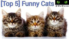 New Video  www.youtube.com/c/WeMeow #cat #cats #wemeow #meow #catlife #cutecat #catlove #lovecats #gatos #gatti #koty #katze #chats #kitty #kitten #kittens #lovecat #funnycat #cateye #beautifulcat #nicecat #amazingcat #catlooking #catofinstagram #catsoftumblr #catstagram #instapets #instacat #pet #pets
