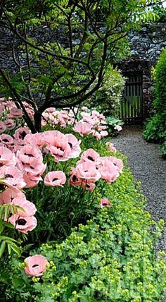 My Cottage Garden ❤
