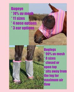 Matching Fly Mask and Leg protection Horse Fly, Horse Riding, Veils, Face Masks, Horses, Outfit, Tall Clothing, Bridal Veils, Veil