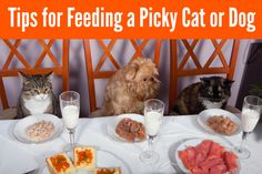 Tips for Feeding a Picky Cat or Dog | Pawsitively Pets