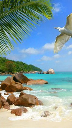 Dream Vacations Vacation Destinations Vacation Spots Beach Wallpaper Sunny Beach Ocean Beach Tropical Beaches Places To Travel Places To Visit Beautiful Islands, Beautiful Beaches, Beach Pictures, Nature Pictures, Beach Wallpaper, Photos Voyages, Tropical Beaches, Ocean Beach, Beautiful Landscapes