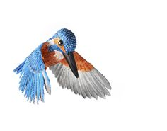 Niharika Birds3636.jpg