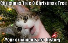 Best 50 Funny Christmas Memes   Quotations and Quotes
