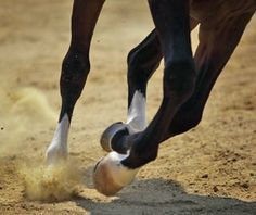 Canter on the Correct Lead Every Time!