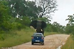 Terrifying Elephant Attack in South African Safari Park