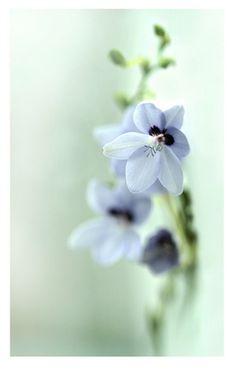 野に咲く癒しの一輪。|takara flower life-フラワーライフ-