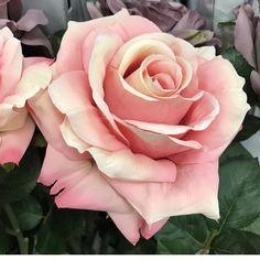 Nice shot from - Modern Beautiful Flower Arrangements, Romantic Flowers, Floral Arrangements, Beautiful Flowers, Rose Flowers, Tattoo Photography, Rose Photography, Rose Fotografie, Rose Reference