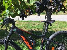 fischis cooking and more: spätsommer in der wachau Bicycle, Bike, Bicycle Kick, Bicycles