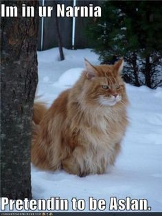 I'm in your Narnia, pretending to be Aslan. Funny Shit, Funny Cute, Funny Stuff, Funny Things, Nerdy Things, Random Stuff, I Love Cats, Crazy Cats, Cat Memes