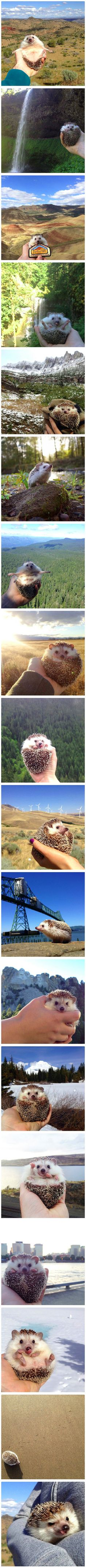 Those of us who want to travel but do not have the time or the money finally have a solution – we can travel in spirit together with Biddy the hedgehog, a little guy on Instagram whose travel photos are becoming insanely popular.
