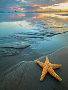 "An old man walked down a beach just before dawn. He saw a young man picking up stranded starfish and throwing them back into the sea. The old man asked ""Why do you spend energy doing what seems to be a waste of time?"" The young man said the starfish would die in the sun. ""But there are so many beaches & millions of starfish. How can your efforts make any difference?"" The young man looked down at the starfish in his hand, threw it to safety in the sea, & said ""It makes a difference to this…"