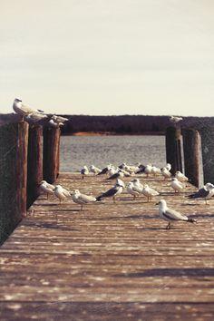 2.12 essex docks, gulls and ducks