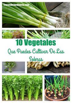 Vegetales Que Puedes Cultivar De Las Sobras #huerta #vegetales #trucosdejardineria