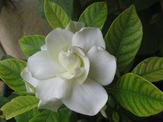 gardenya - Google'da Ara