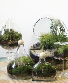 How to choose terrarium plants and arrange beautiful compositions? We shall help you understand the basics of these plants, the most popular species Sempervivum, Echeveria, Twig Terrariums, How To Make Terrariums, Terrarium Plants, Aquascaping, Indoor Garden, Indoor Plants, Container Gardening