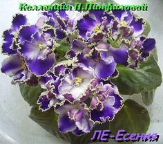 Ле-Есения (лист, жду деток). Фото из интернета