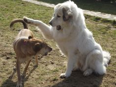 Bella et Dgena