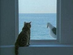 *looking out looking in