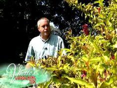d       9/17    Weigela - Exc. advice on pruning weigela.