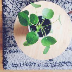Pilea plant Tapis berbère
