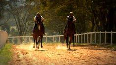 Produtora:bigBonsai Direção:Felipe Briso DP:Tiago Tambelli Camera: HPX-500; HVX-200 Horse Racing, Brazil, Horses, Board, Animals, Animales, Animaux, Animal, Animais