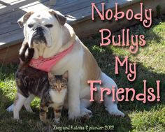 I createed a poster/sign for anti bullying with a photo of our bulldog fur-baby Zoey and our feline fur-baby Katniss.  Feel free to share and re-pin! :)  from True's Gift's From the Heart: A Few Shots of Our Fur-babies