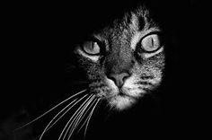 dessin chat noir et blanc - Recherche Google