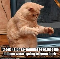 Lolcats: It took Ralph six minutes to realize the balloon wasn't going to come back.