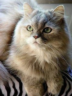 BEAUTIFUL CAT <3